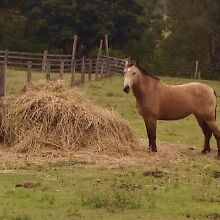 Pasture Hay 4X4 $40 Canungra Ipswich South Preview