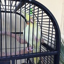 WE ARE SELLING OUR WEERO AND CAGE WITH E.t.c Bentley Canning Area Preview