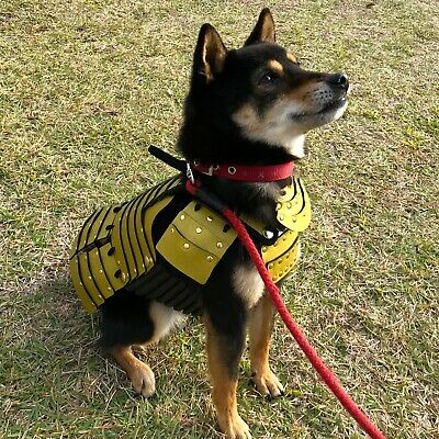 Bold Gold Samurai Armor For Small Dogs, Dog Costume, Clothing, Dog-G-902
