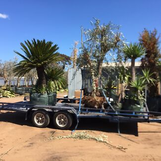 Adelaide plant recovery service - re-homing unwanted plants Adelaide CBD Adelaide City Preview