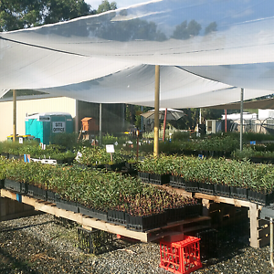 Farm trees and shrubs .landscape plants grasses $2.00 each McLaren Vale Morphett Vale Area Preview