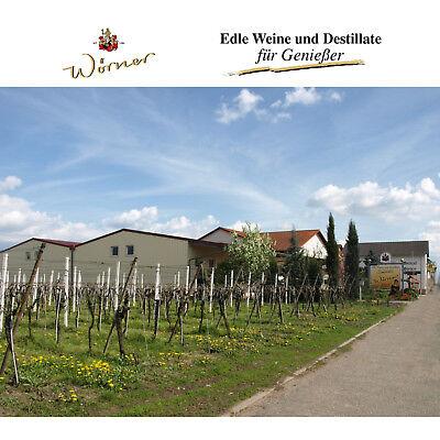 WEINGUT WÖRNER 12 Fl. Wein Probierpaket, Weißwein Rotwein lieblich, Weinprobe
