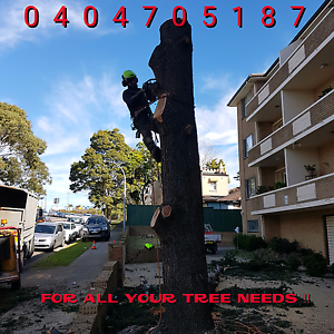 Sydney clear view tree and garden management  Ryde Ryde Area Preview