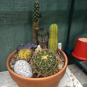 Cactus gardens and succulents Invermay Launceston Area Preview