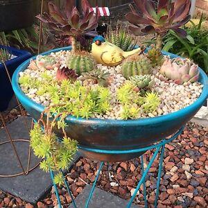 Cacti, Succulent, Sedum Gardens Penna Sorell Area Preview