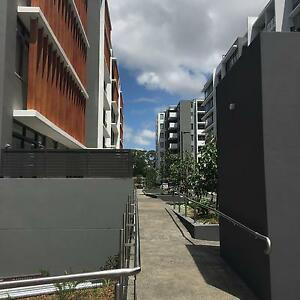 New unit in Lane Cove, own bedroom and bathroom Lane Cove Lane Cove Area Preview