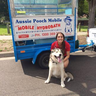 Pooch dog grooming in melbourne region vic gumtree australia free aussie pooch mobile dog wash solutioingenieria Image collections