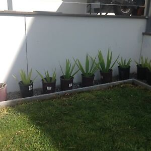 YUKKAS JUST BEEN POTTED Kingston Kingborough Area Preview