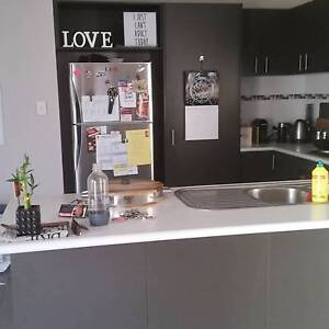 Room 4 rent FOR OUR COSY, CHILLED OUT HOUSEHOLD $150P/WEEK Stirling Stirling Area Preview