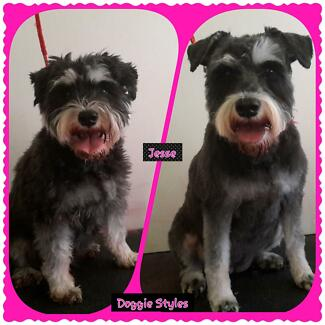 Doggie Styles Dog Grooming Elizabeth East Playford Area Preview