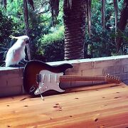 1987 FENDER STRATOCASTER '54 Reissue MIJ • SOLD Manly Manly Area Preview