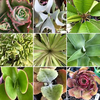 PLANTS 🌱 4 SALE - Succulent, Cacti + more....
