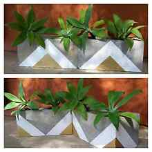 4 x Agave in 2 decorative upcycled planter boxes Pimpama Gold Coast North Preview