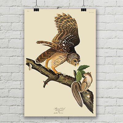 Barred Owl Vintage Animal Art Print Canvas Poster Audubon Bird Illustration  Animal Art Vintage Animal