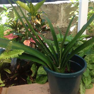 Clivia and other plants