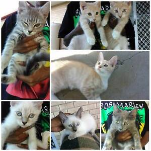 Kittens To GiveAway In Need Of A Good Home  '