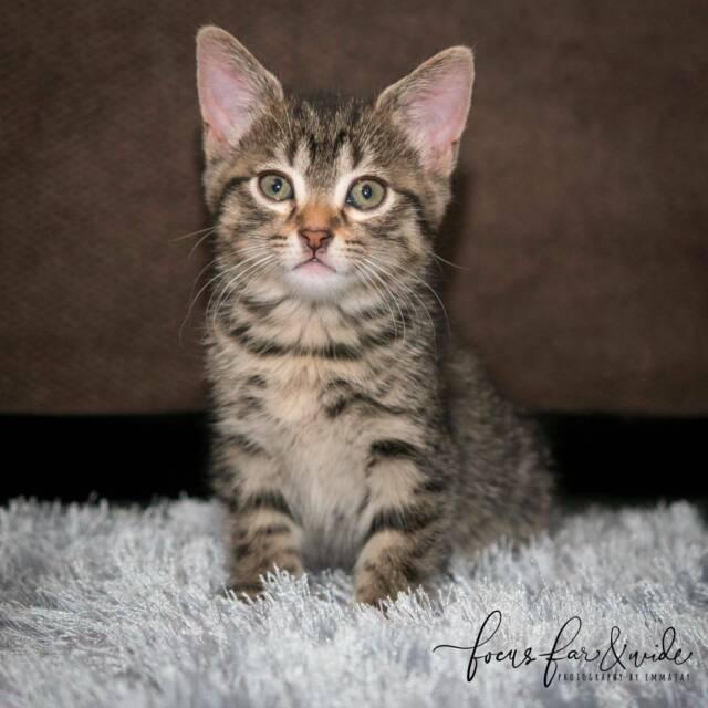 Paris rescue kitten SK2672 VET WORK INCLUDED