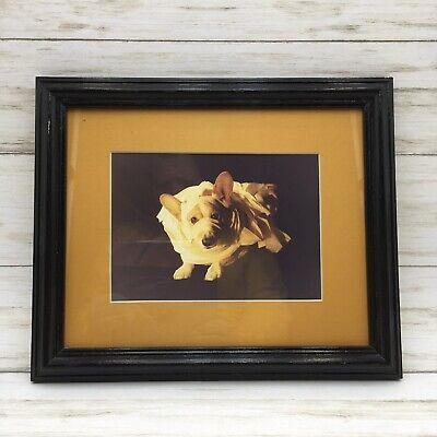 Vintage Halloween Corgi Dog Photograph Dressed as Mummy Framed