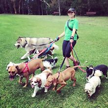 Doggy daycare North Shore Sydney Killara Ku-ring-gai Area Preview