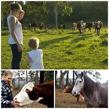 Quality Cattle/Horse property 2 Dams, Large Colourbond Shed102ac. Kyogle Kyogle Area Preview