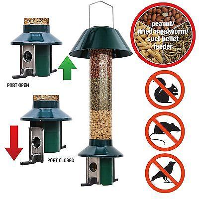 Squirrel Proof Bird feeder Dried Mealworm/Peanut Rat & Large Bird Proof PestOff