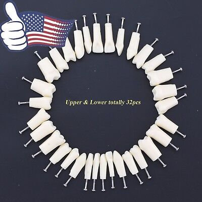 32pc Kilgore Nissin 200 Compatible Dental Replacement Typodont Teeth Upper Lower
