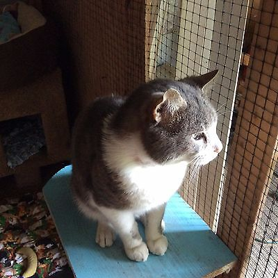 Sponsor a Cat Photo & GIFT HELP care & feed cats and kittens small shelter in KY