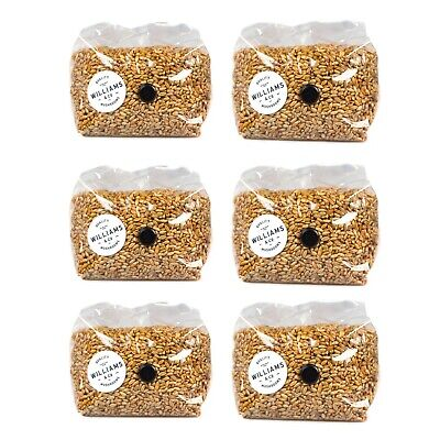 6 x 1KG Premium Sterilised Rye Grain Bag | Mushroom Growing & Spawn Cultivation