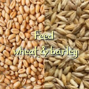 WANTED: feed barley and wheat