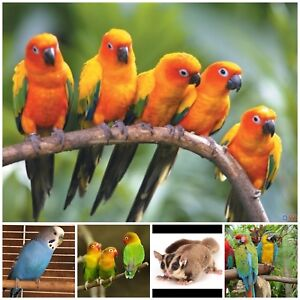 Unwanted birds and other exotics