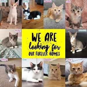 😻 CATS & KITTENS NEEDING THEIR FOREVER HOMES 😻