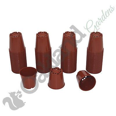 Small Flower Pots Bulk (50 x 6cm Plant Pots Small Terracotta Plastic Flower Pot Cactus Quality)