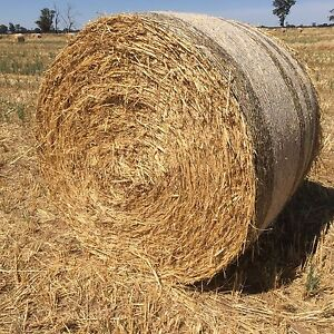 Oaten hay 5x4 round bales weed free good colour no rain damage Cobram Moira Area Preview