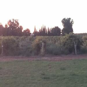 Small hobby farm /vineyard for sale Renmark West Renmark Paringa Preview