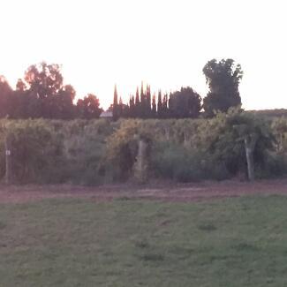 Small hobby farm /vineyard for sale