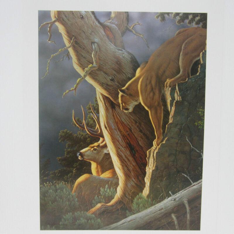 Moment Of Truth By Tom Mansanarez Wildlife, Deer Mountain Lion.