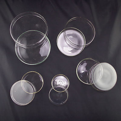 60mm90mm Petri Dishes With Lids Clear Glass