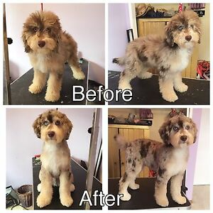NW/SW Certified Dog Groomer :)