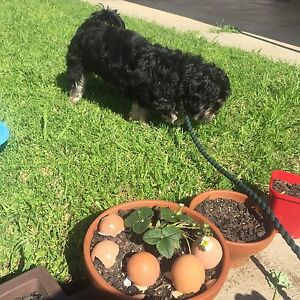 Who lost a lovely dog ! Tranmere Campbelltown Area Preview