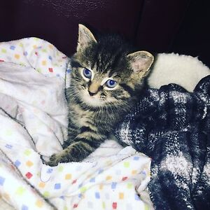 baby kitten to go for a good home