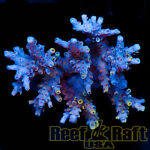 reefraftusa