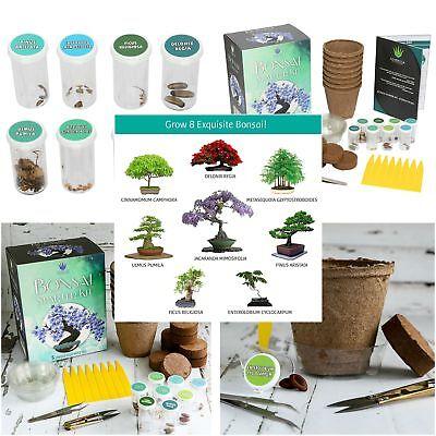 Bonsai Growing Kit Complete Gardening Set 8 Colorful Bonzai Trees Starter - Grow Bonsai Tree