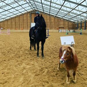 Horse for part-time lease. Indoor arena, trails Bombproof