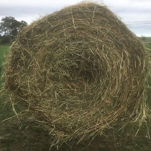 Large Round Hay Alphalpha Timothy Bales