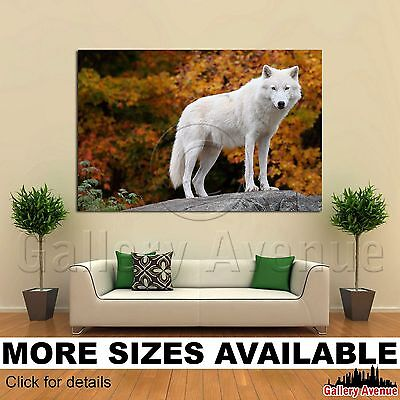 - Wall Art Canvas Picture Print - Arctic Wolf 3.2