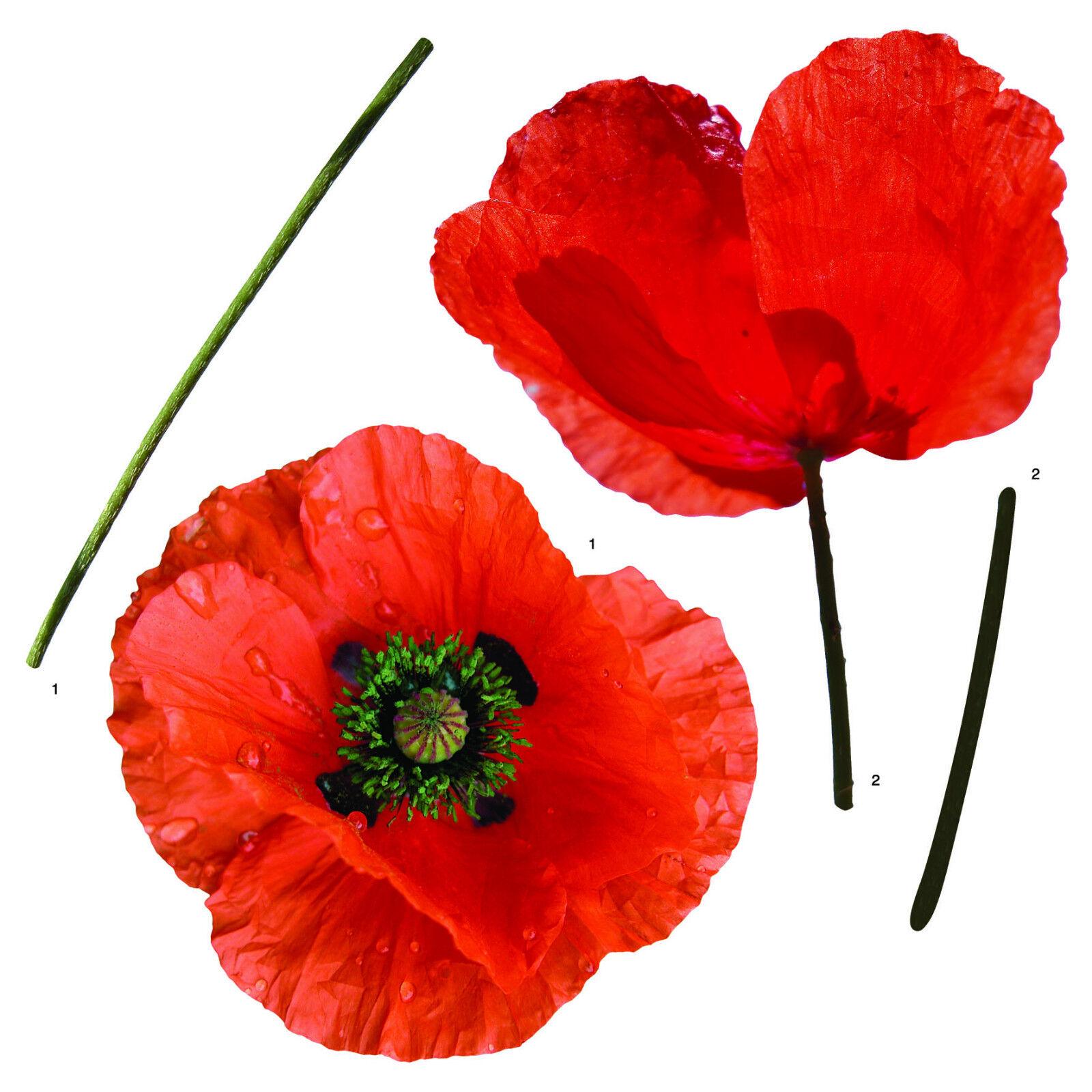 Wandtattoo Rote Blumen : Wandsticker Wandtattoo rote Mohnblumen Mohn Blüten Blumen Aufkleber