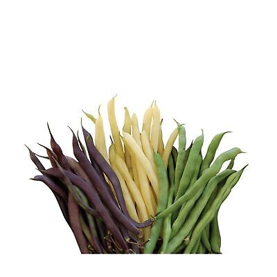 Burpee Three Color Blend Bush Bean Seeds 2 ounces of seed