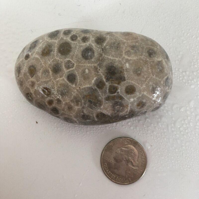 Large UNPOLISHED Petoskey Stone Hexagonaria Coral Fossil Michigan Rock