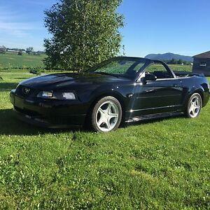 Mustang GT triple black