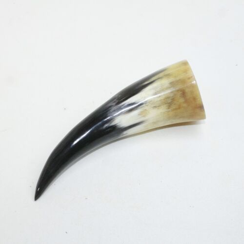1 Polished Cow Horn Tip #4610 Natural Colored